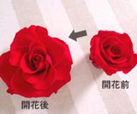 ブルーミング(開花)コース2